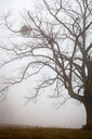 A bare tree in a field - INGF08072