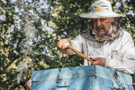 Russland, Beekeeper checking frame with honeybees - VPIF01140