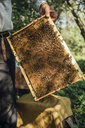 Russland, Beekeeper checking frame with honeybees - VPIF01143