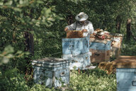 Russland, Beekeeper checking frame with honeybees - VPIF01146