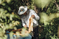 Russland, Beekeeper checking frame with honeybees - VPIF01149