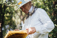 Russland, Beekeeper checking frame with honeybees - VPIF01152
