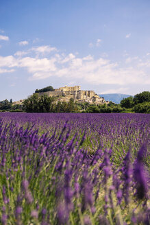 France, Grignan, view to the village with lavender field in the foreground - GEMF02598