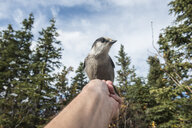 Close-up of bird perching on hand against sky - CAVF56959