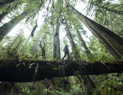 Low angle view of man walking on fallen tree trunk at Jedediah Smith Redwoods State Park - CAVF57247