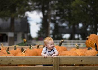 Cheerful baby boy sitting amidst pumpkins - CAVF57419