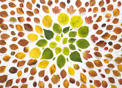 Autumn leaves on white background - ABRF00255