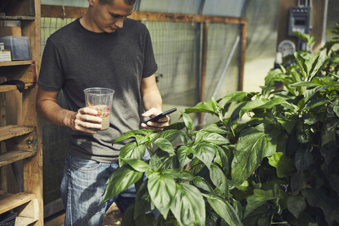 Male farmer using smart phone while standing in greenhouse - TGBF01635