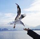 Hand feeding gull at lakeshore - WWF04501