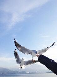 Hand feeding gull at lakeshore - WWF04504