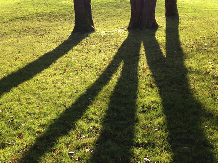 Shadow of trees on meadow - WWF04534