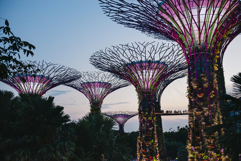 Singapore, Gardens by the Bay, Supertree Grove at sunset - GEM02644
