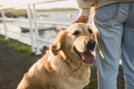 Close-up of woman with her golden retriever dog at the waterfront - RAEF02245