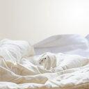 Refuge for polar bear model on bed - INGF08452