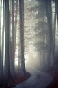Trees in the forest during foggy weather - INGF08497
