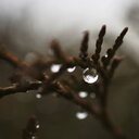 Close-up shot of beautiful raindrops on a branch - INGF08539