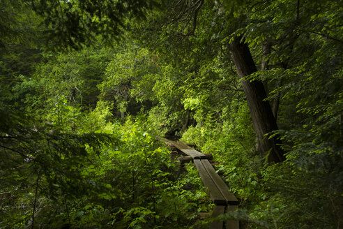 Boardwalk amidst trees in forest at Adirondack State Park - CAVF57750