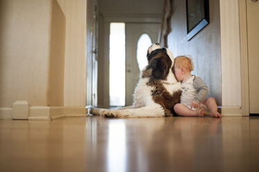 Full length of baby boy sitting with dog at home - CAVF57896