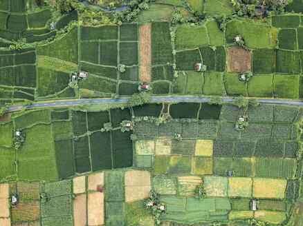 Indonesia, Bali, Keramas, Aerial view of rice fields - KNTF02460