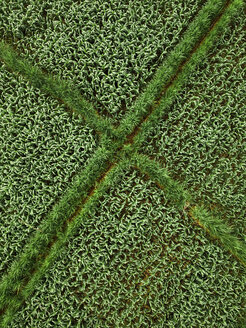 Indonesia, Bali, Keramas, Aerial view of corn fields - KNTF02469