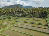 Indonesia, Bali, Candidasa, Aerial view of rice fields - KNTF02485