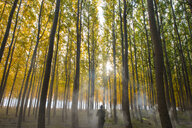 Rear view of man standing amidst autumn trees during foggy weather - CAVF57988