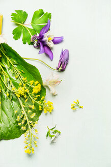 High angle view of fresh purple flowers against a white background - INGF08807