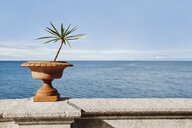 Plant growing on retaining wall by sea against sky - CAVF58419