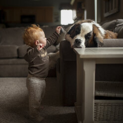 Full length of curious baby boy touching dog's ear while standing at home - CAVF58515