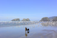 Rear view of dogs running while birds flying at beach against blue sky - CAVF58608