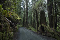 Road amidst trees at Jedediah Smith Redwoods State Park - CAVF58635