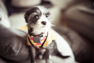 High angle portrait of dog sitting on sofa at home - CAVF58713