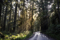 Empty road amidst trees in Redwood National and State Parks - CAVF58851