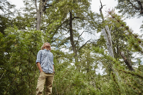Chile, Puren, Nahuelbuta National Park, boy standing in bamboo forest looking up - SSCF00137
