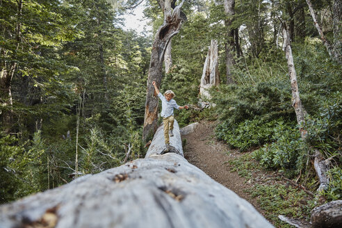 Chile, Puren, Nahuelbuta National Park, boy balancing on a tree trunk in forest - SSCF00146
