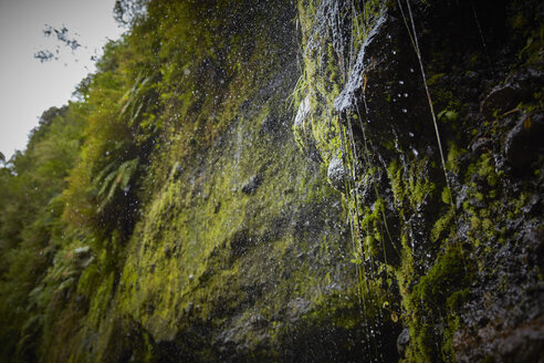 Chile, Patagonia, Osorno Volcano, water flowing over mossy rock face at Las Cascadas waterfall - SSCF00173