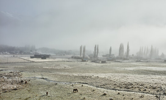 Argentina, Patagonia, Lake District, winterly farm landscape in fog - SSCF00338