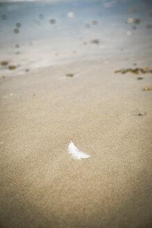 White feather lying on sandy beach - REAF00499