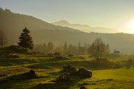 Austria, Vorarlberg, Nagelfluhkette Nature Park, Balderschwanger Tal, Sippersegg near Hittisau - LBF02292