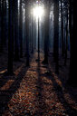Tree trunks at backlight in autumn - JTF01153