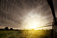 A spiders web out in nature - INGF09224
