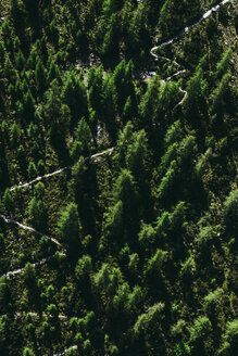 High angle view of trees in the forest - INGF09389