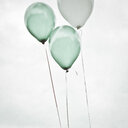 3 blue helium balloons against a whit background - INGF09701