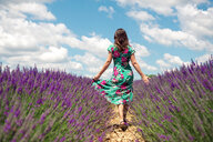 France, Provence, Valensole plateau, back view of woman walking among lavender fields in summer - GEMF02670