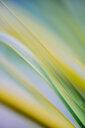 Full frame shot of plants - INGF10059