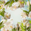 Close-up of white flowering plants - INGF10110