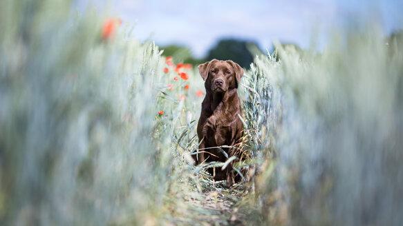 Portrait of a dog in a field - INGF10200