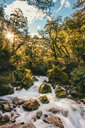 Scenic view of a stream flowing through the rocks in a forest - INGF10282