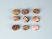 High angle view of snail shells against a blue background - INGF10291