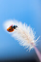 Close-up shot of a ladybug on a flower - INGF10315